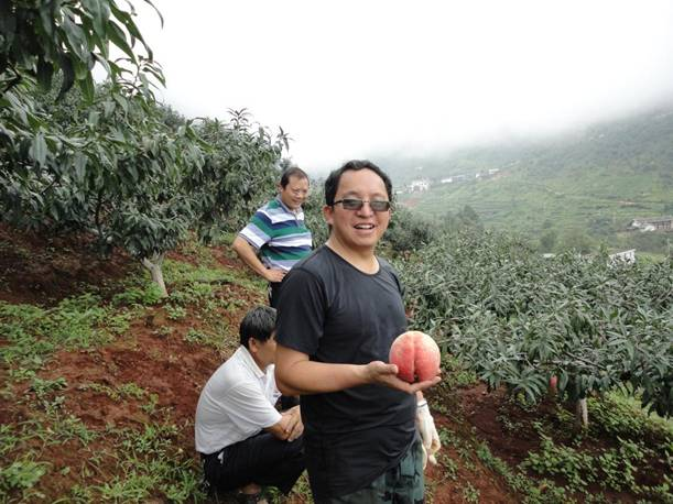 丽江雪桃开发公司到华坪县收购丽江雪桃