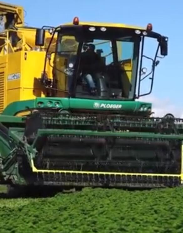 大型机械割草机的欧芹收获